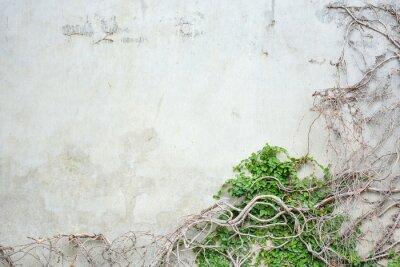 Fototapeta Uprawa winorośli na betonową ścianę