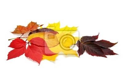 Urlop jesień kolorowy