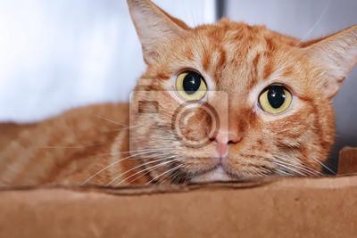 Fototapeta uroczy pomarańczowy pręgowany kot