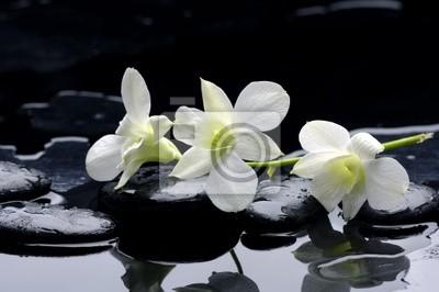 Uroda rząd orchidei i kamienia z refleksji
