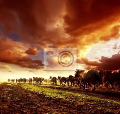 Uruchamianie dzikie konie na zachodzie słońca