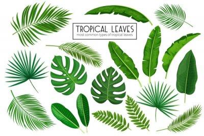 Fototapeta ustaw tropikalne liście