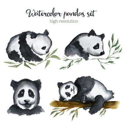 Fototapeta Ustawić pandy akwarela.