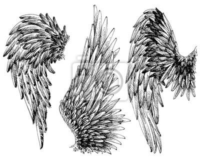 Fototapeta ustawić skrzydła. Wyciągnąć rękę kolekcja szczegółowych skrzydeł