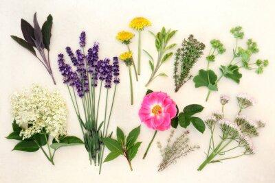 Fototapeta Uzdrowienie ziół i kwiatów