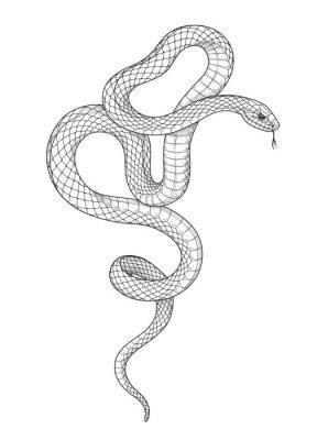 Fototapeta Vector Hand Drawn Monochrome Snake
