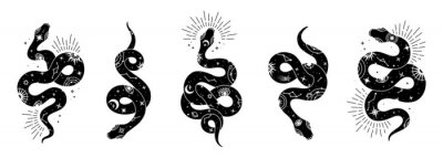 Fototapeta Vector snake set of mystical magic objects- moon, eyes, constellations, sun and stars. Spiritual occultism symbols, esoteric objects.