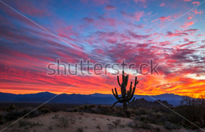 Fototapeta Vibrant Arizona sunrise with funky Sagauro cactus at Toms Thumb trailhead in the McDowell Sonoran Preserve in North Scottsdale, AZ.