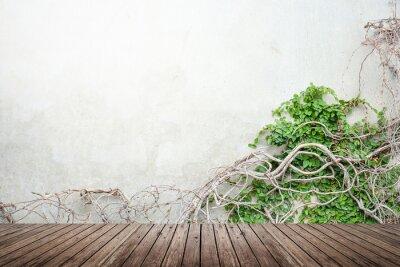 Fototapeta Vine on concrete wall and wood floor