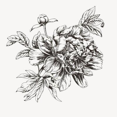 Fototapeta Vintage atrament ciągnione kwiat piwonii