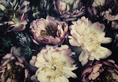 Fototapeta Vintage bouquet of beautiful peonies on black. Floristic decoration. Floral background. Baroque old fashiones style. Natural flowers pattern wallpaper or greeting card