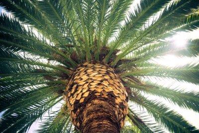 Fototapeta Vintage tonowe tropikalne palmy