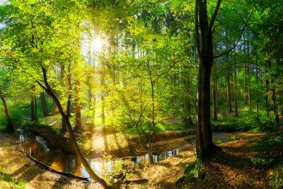 Fototapeta Wald im Herbst Landschaft mit Bach und Sonne