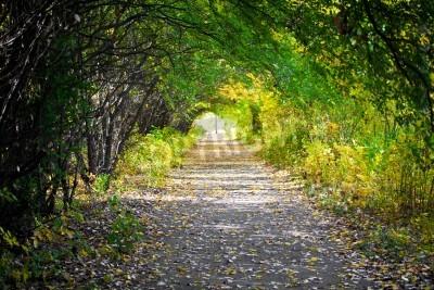 Fototapeta Walkway with trees