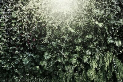Fototapeta Wall with tropical plants. Nature background.