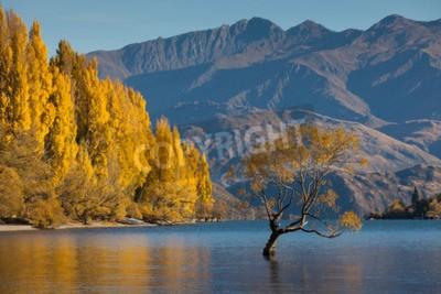 Fototapeta Wanaka w kolorach jesieni, Glendhu Bay, Wyspa Południowa, Nowa Zelandia