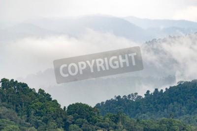 Fototapeta Warstwy wysokiej góry, mglisty na lasach tropikalnych.