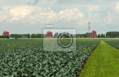 Warzywa rosnące na polu w lecie