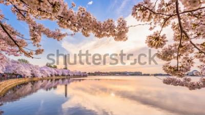 Fototapeta Washington DC, USA w sezonie wiosennym w basenie pływowym.