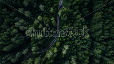Fototapeta Wąska ulica między lasem, widok trutnia