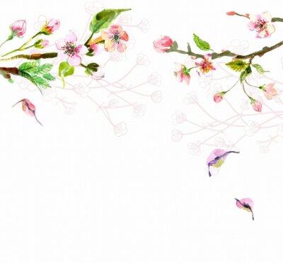 Fototapeta Watercolor apple flowers