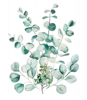 Fototapeta Watercolor eucaliptus leaves set illustration