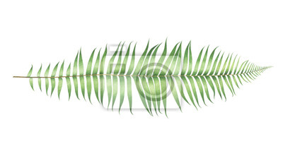 Watercolor fern isolated on white background.