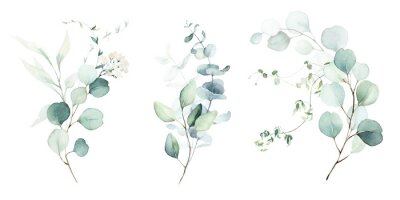 Fototapeta Watercolor floral illustration set - green leaf branches collection, for wedding stationary, greetings, wallpapers, fashion, background. Eucalyptus, olive, green leaves, etc.