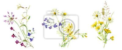 Fototapeta Watercolor multicolored bouquets of wild flowers