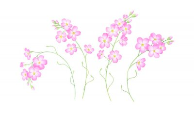 Watercolor set of pink forget me not flowers isolated on white background.