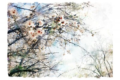 Fototapeta watercolor style and abstract image of cherry tree flowers