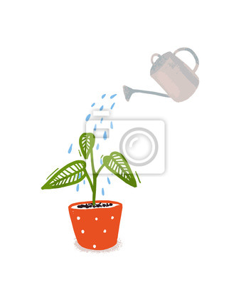 Fototapeta Watering of home plant with green leaves in orangle pot. Hand drawn illustration of home gardening, symbol of care and growth.