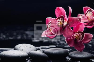 Wciąż życie z gałęziastą czerwoną orchideą na czarnych kamieniach