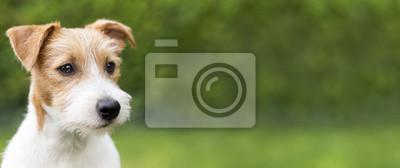 Fototapeta Web banner szczenię szczęśliwy cute jack russell terrier pies