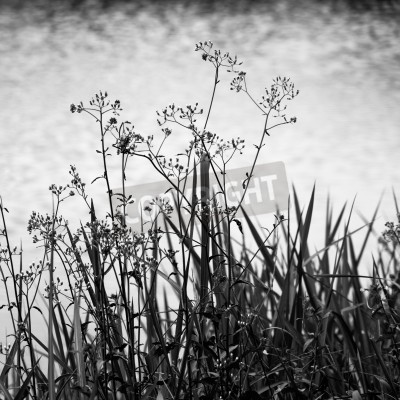 Fototapeta Weeds and grasses on water reflection background.