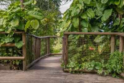 Fototapeta Weg im Park, Parc des Mamelles w Gwadelupie