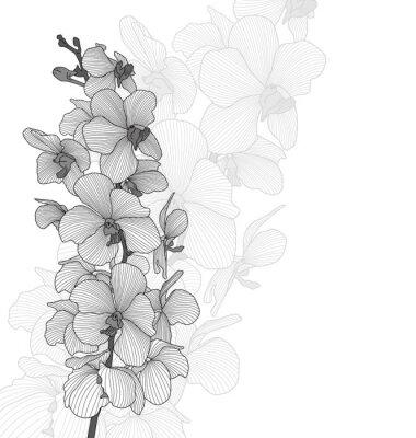 Fototapeta Wektor kwiaty orchidei