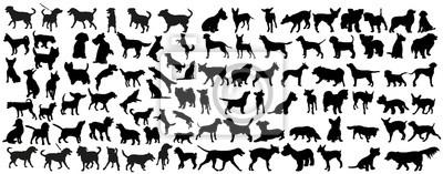 Fototapeta wektor, odizolowanych czarna sylwetka psa, kolekcja