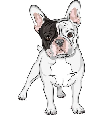 Sugar skull girl clipart moreover Search further Paw Prints Clip Art 23967 together with How To Draw A Cartoon Dog besides How To Draw A Bulldog  English Bulldog. on bulldog print