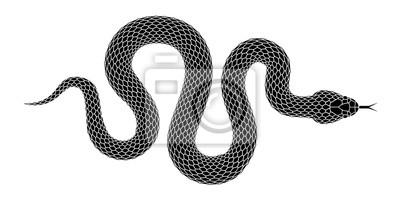 Fototapeta Wektor węża sylweta samodzielnie na białym tle.