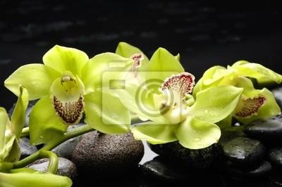 Wellness pojęcie z kamieni zen i Orchidea