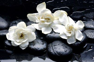 Fototapeta Wet zen spa kamienie z kwiatu gardenii