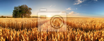Fototapeta Wheat flied panorama with tree at sunset, rural countryside - Agriculture
