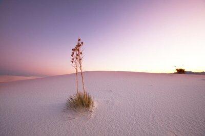 Fototapeta White desert