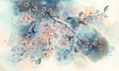 Fototapeta White sakura flower blossom on a dark background watercolor.