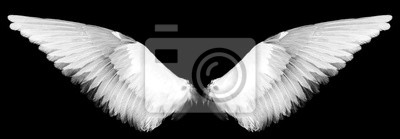Fototapeta white wings on a black