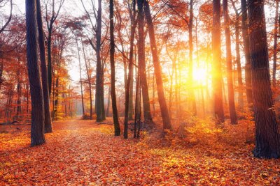 Fototapeta Wibrujący słońca w lesie jesienią