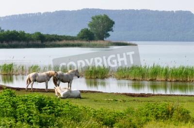 Fototapeta Widok na Jezioro Vico we Włoszech z trzech osobników białych koniach