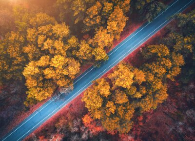 Fototapeta Widok z lotu ptaka droga w pięknym jesień lesie przy zmierzchem. Piękny krajobraz z pustą wiejską drogą, drzewa z czerwonymi i pomarańczowymi liśćmi. Autostrada przez park. Widok z góry od latającego