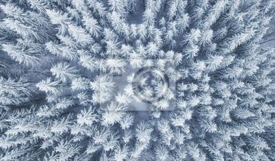 Fototapeta Widok z lotu ptaka przy zima lasem. Sosny jako tło. Zimowy krajobraz z powietrza. Naturalny las tło. Las tło z drona
